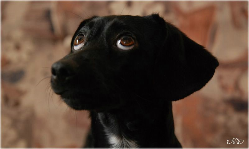 expression_en_perros_ojos_4