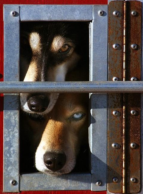 expression_en_perros_ojos_6