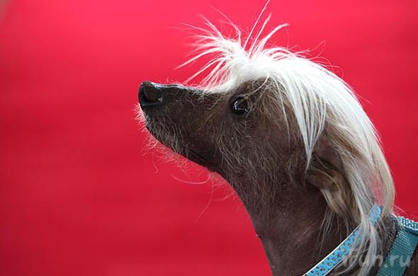 perros-feos-10