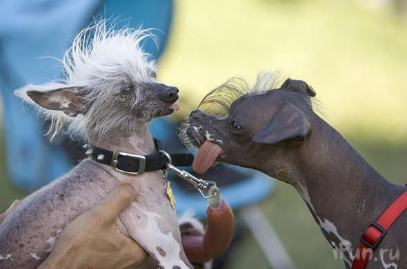 perros-feos-8