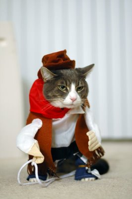 ropa-gato-02