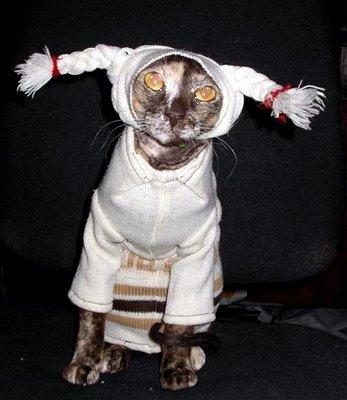 ropa-gato-03