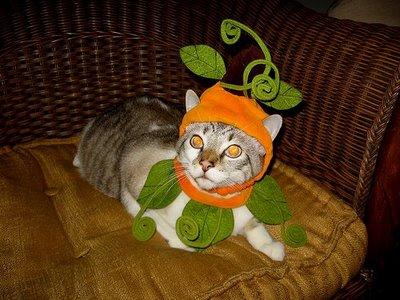 ropa-gato-04