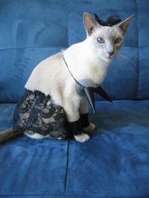ropa-gato-06