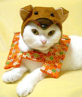 ropa-gato-07