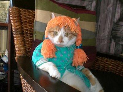 ropa-gato-08