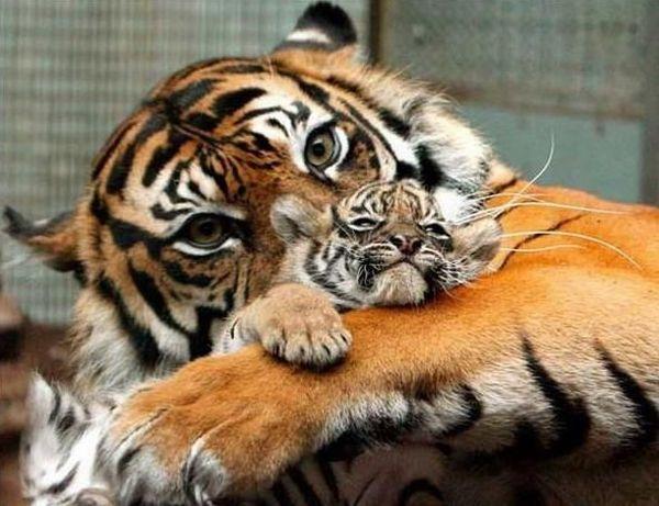 animales-padres-4