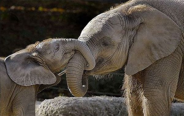 animales-padres-5