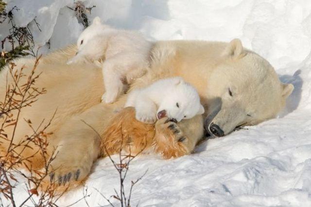animales-padres-8