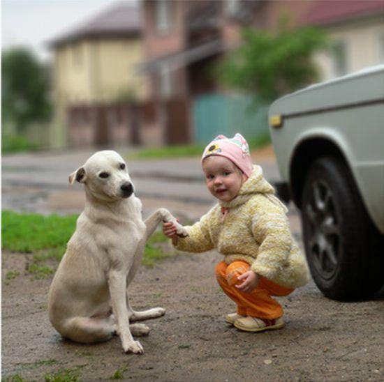 mascotas-2