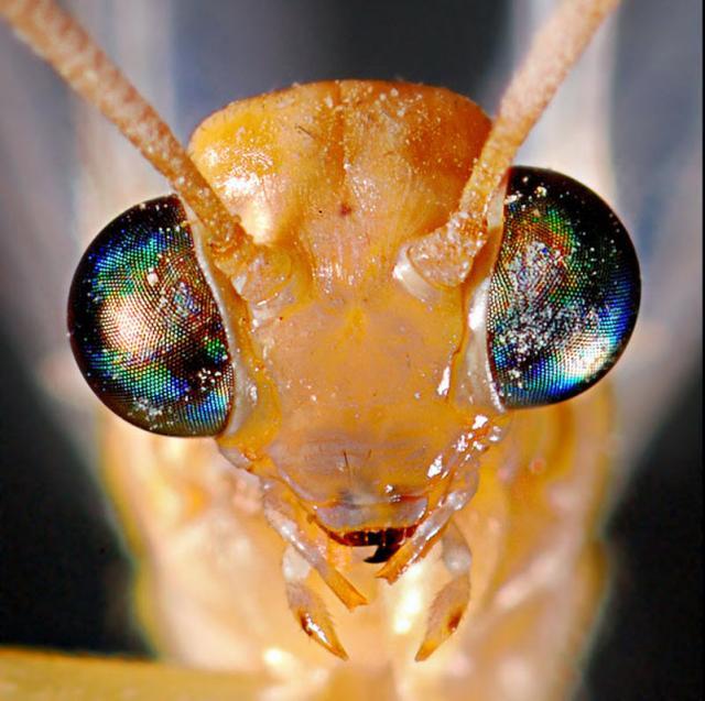 ojos-insectos-01