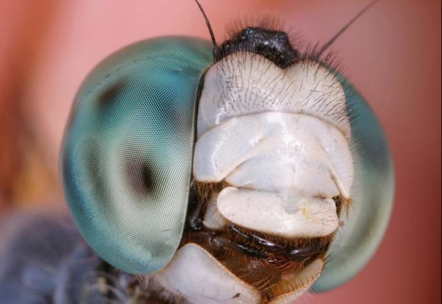ojos-insectos-010