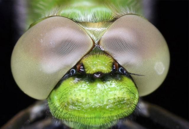 ojos-insectos-011