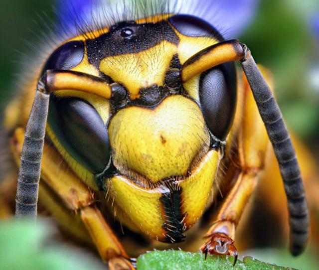 ojos-insectos-02