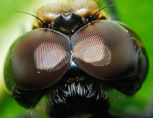 ojos-insectos-04