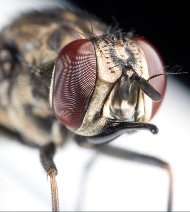 ojos-insectos-05