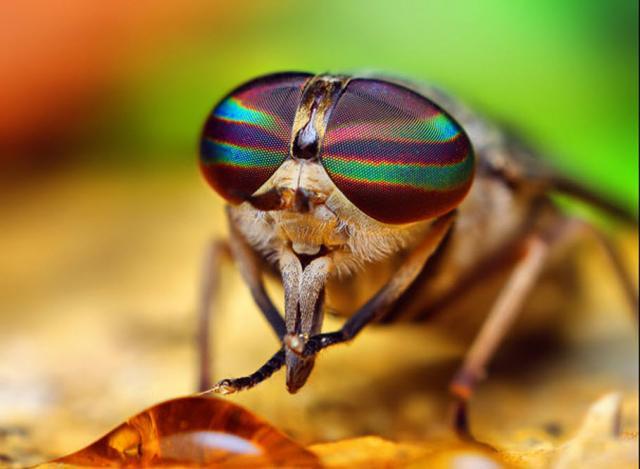 ojos-insectos-07