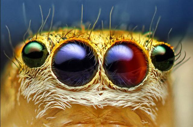 ojos-insectos-08
