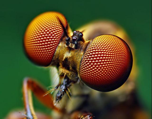ojos-insectos-09